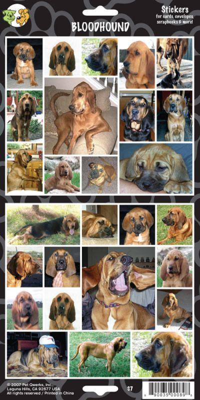 Samolepky bloodhound James & Steel