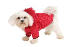 Bunda prošívaná (doprodej skladových zásob) - krémová XXS I love pets